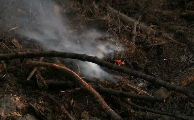 Lasy wyschnięte na wiór. Najwyższe zagrożenie pożarowe w większości województw
