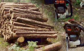 Ekolodzy pilnują pilarzy w Puszczy Białowieskiej. Napadnięty operator ma uraz szyi