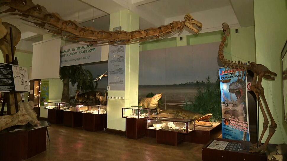 Pełne piwnice i pusty budżet. Ogromne problemy Muzeum Ewolucji