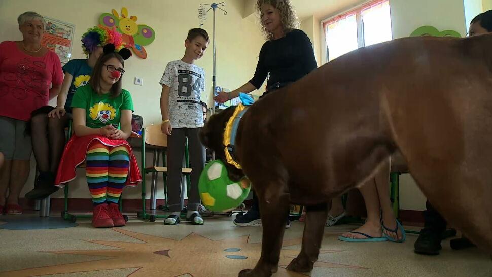 Na ratunek pies. Dogoterapia przywróci uśmiech na twarzach pacjentów