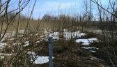 Zachwaszczone bagniste pole. Tak wygląda miejsce katastrofy smoleńskiej