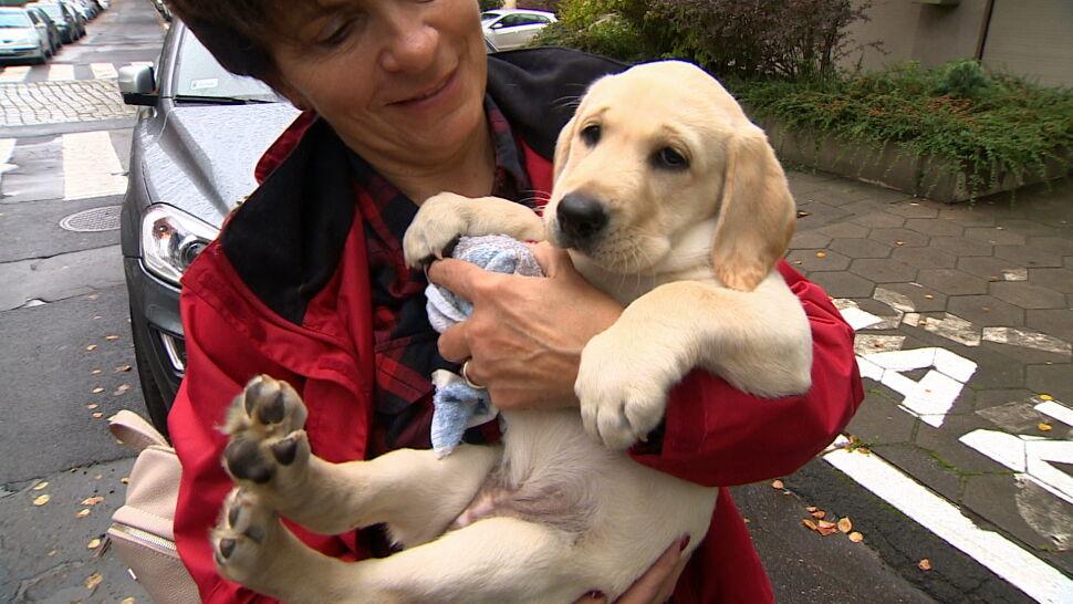 Fundacja szuka wolontariuszy, którzy pomogą wychować psich przewodników