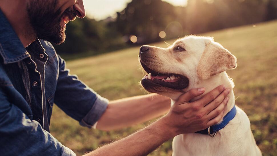 Na spacerze z psem pamiętajmy o smyczy. Jej brak może kosztować nawet 5000 złotych