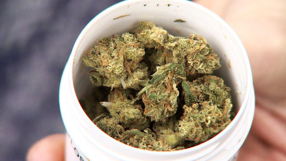 Medyczna marihuana dostępna tylko na papierze. Kiedy w aptekach?