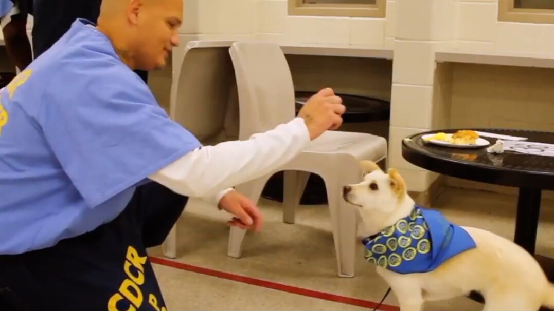 Psy jako sposób na resocjalizację. Niezwykła akcja w amerykańskich więzieniach