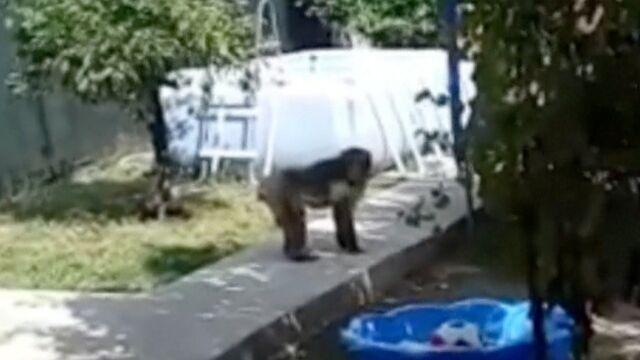 Pościg za makakiem trwał kilka godzin.