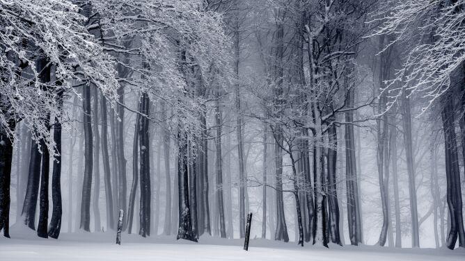 Prognoza pogody na dziś: <br />miejscami popada śnieg