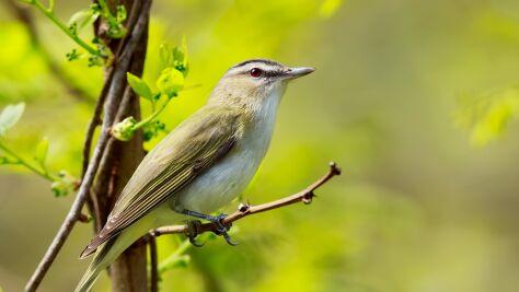 Zmiana klimatu może sprawiać, że ptaki się kurczą