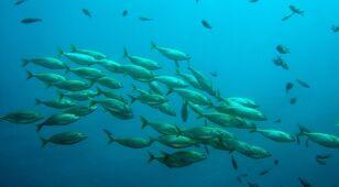 Coraz mniej tlenu w oceanach. Alarm naukowców