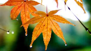 Miejscami deszcz, może silniej powiać