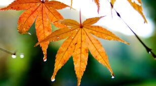Prognoza pogody na jutro: miejscami deszcz, może silniej powiać