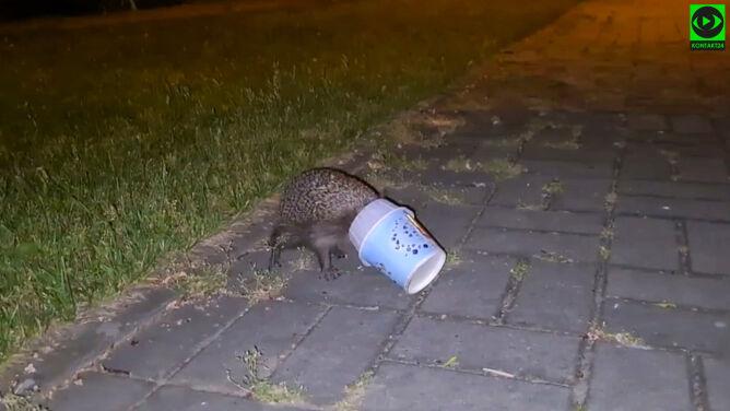 """""""Na chodniku chodzi w kółko jeż z kubkiem po lodach na łebku"""""""