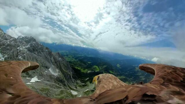Pięć lodowców w pięć dni. Zobacz Alpy z perspektywy bielika