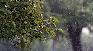 Prognoza pogody na jutro: lokalne opady deszczu