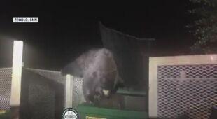 Niedźwiadek utknął w śmietniku
